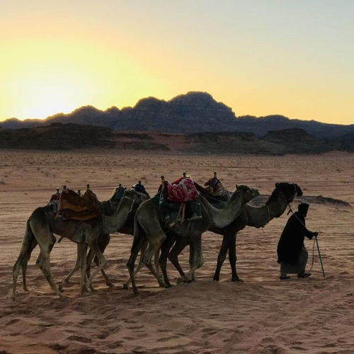 This photo I took during watching sunset in wadi rum in Jordan, the love and peace relationship between this camel owner and his camels made me fully understand